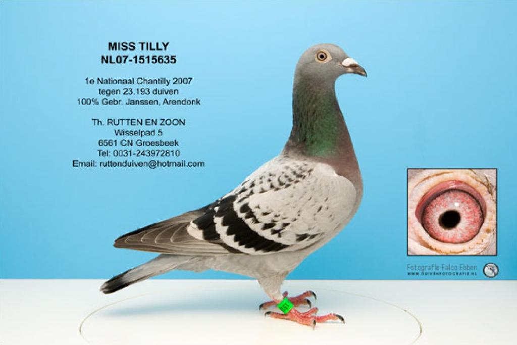 louis van loon duiven netherlands