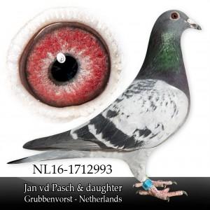 size-medium wp-image-21987 alignleft